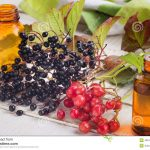 elderberry-viburnum-medicines-fresh-wooden-background-homeopathy-concept-selective-focus-49615394